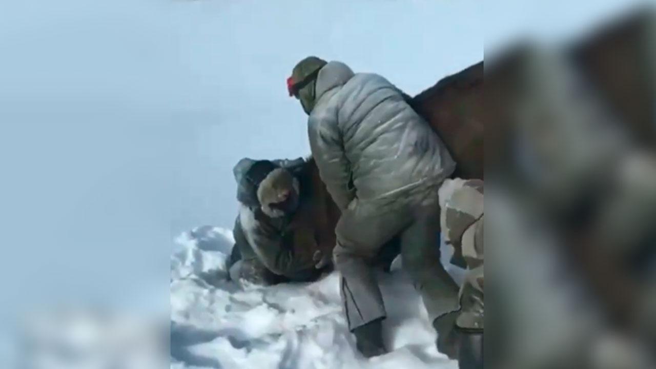 Суд арестовал троих мужчин, участвовавших в расправе над беременной лосихой в Тверской области