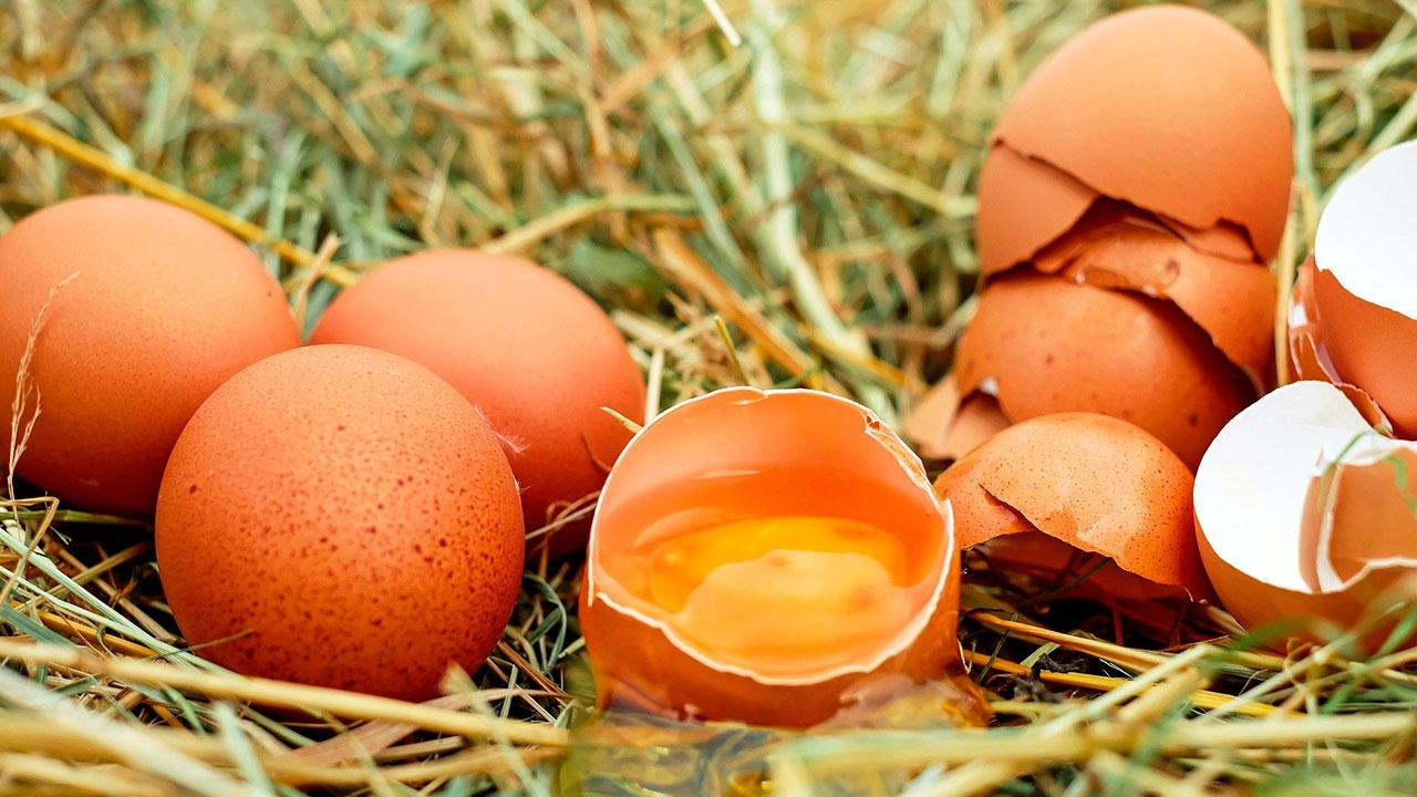 В Союзе птицеводов спрогнозировали снижение цен на яйца в апреле
