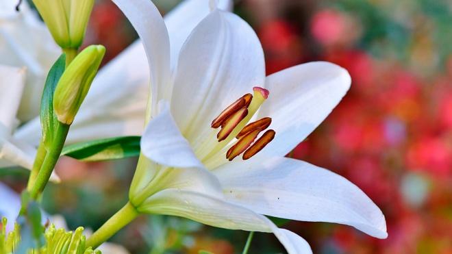Флорист рассказала, какие цветы нельзя дарить на 8 Марта