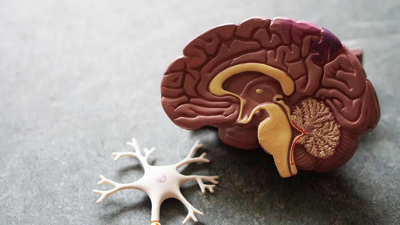 Ученые нашли причину старения мозга