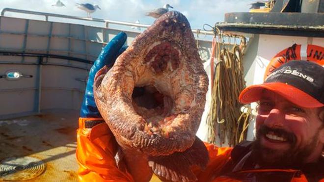 Американец выловил из океана «огромного монстра с острыми как бритва зубами»