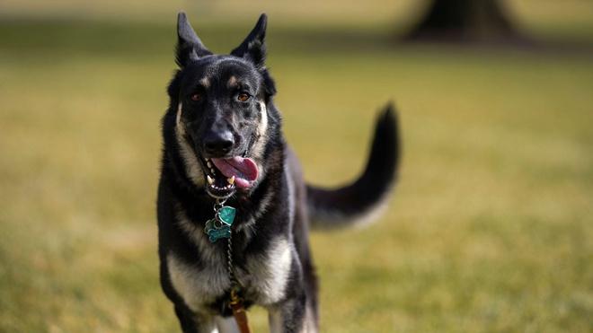 Собака Байдена укусила человека во время прогулки