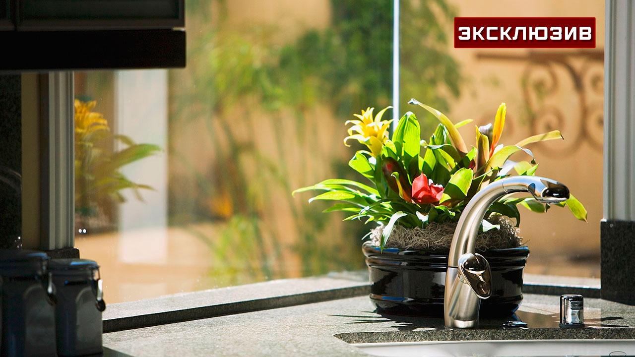 Эксперт перечислил комнатные растения, опасные для человека