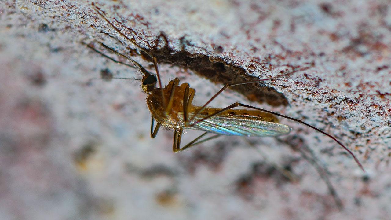 Специалисты предупредили о нашествии комаров