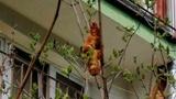«Боятся, что проникнет в квартиру»: жители Польши испугались круассана дереве
