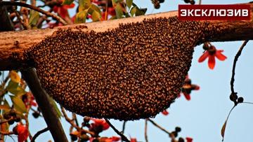 Чудо-лекарство или миф: эксперт рассказала о целебных возможностях пыльцы и прополиса