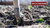 Агрономы рассказали, стоит ли перекапывать огород осенью