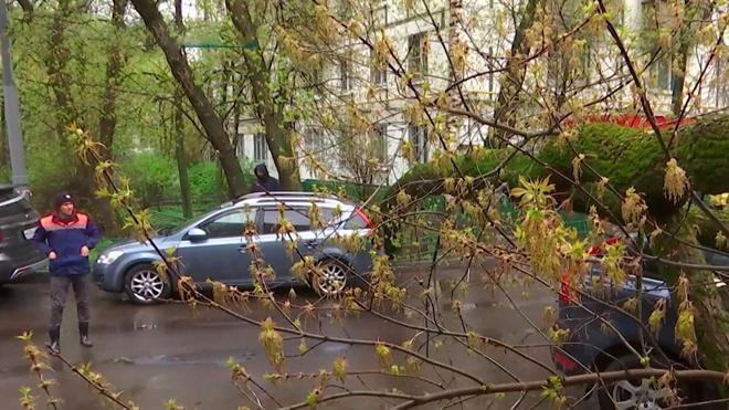 В Москве объявили желтый уровень погодной опасности
