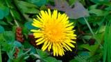Чтобы не получить штраф: садовод назвала эффективный способ борьбы с  сорняками на дачном участке