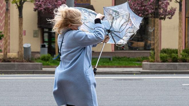 МЧС выпустило экстренное предупреждение о сильном ветре в Москве