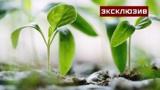 Цветовод предупредила об опасности мини-огорода на подоконнике