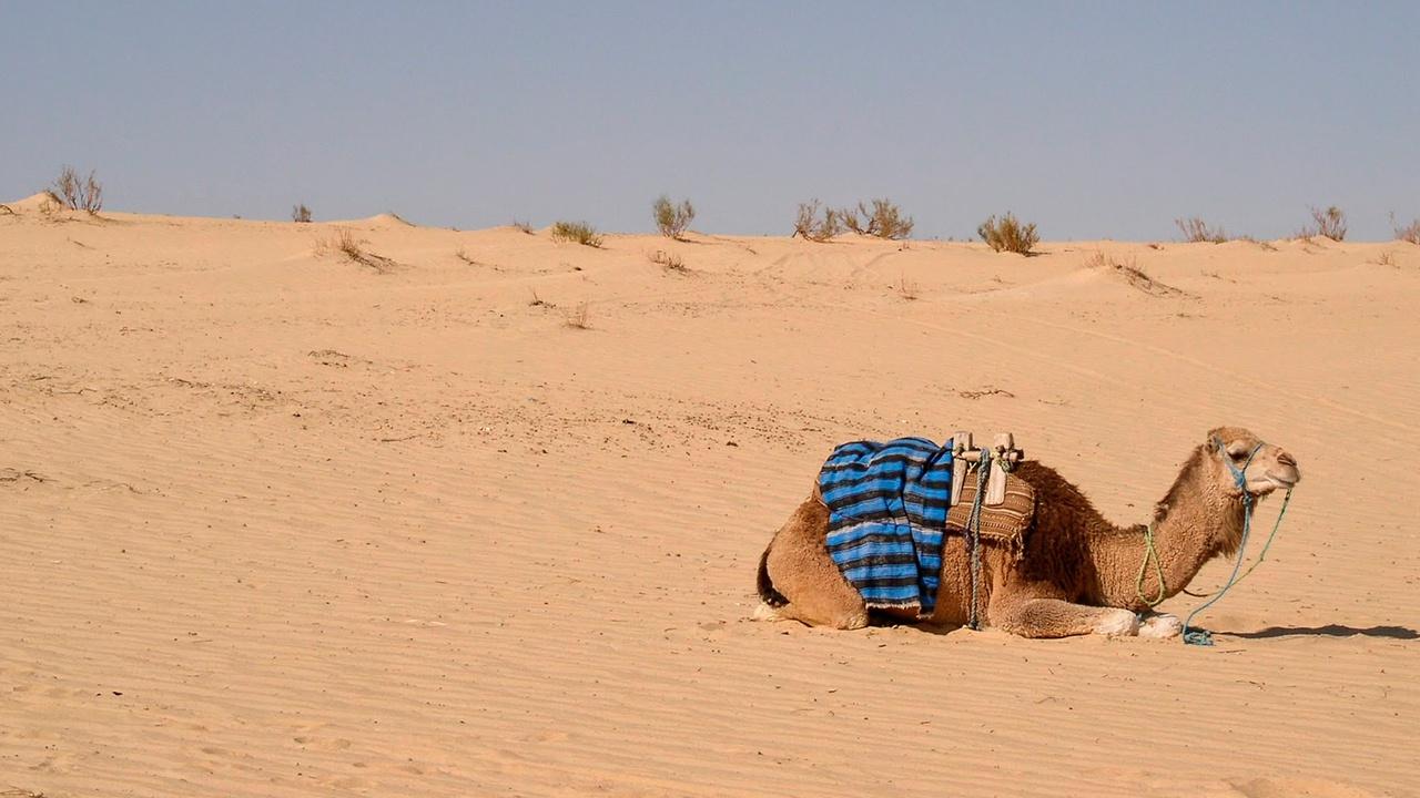 Тунис закрывается из-за пандемии COVID-19