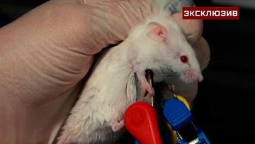 Дело пахнет клофелином: анестезиолог провела эксперимент по установлению смертельной дозы препарата