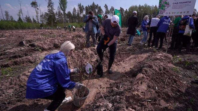Участники акции «Сад памяти» высадили уже 22 миллиона деревьев