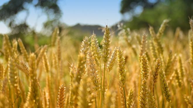 В России думают над расширением ограничений на экспорт продуктов питания