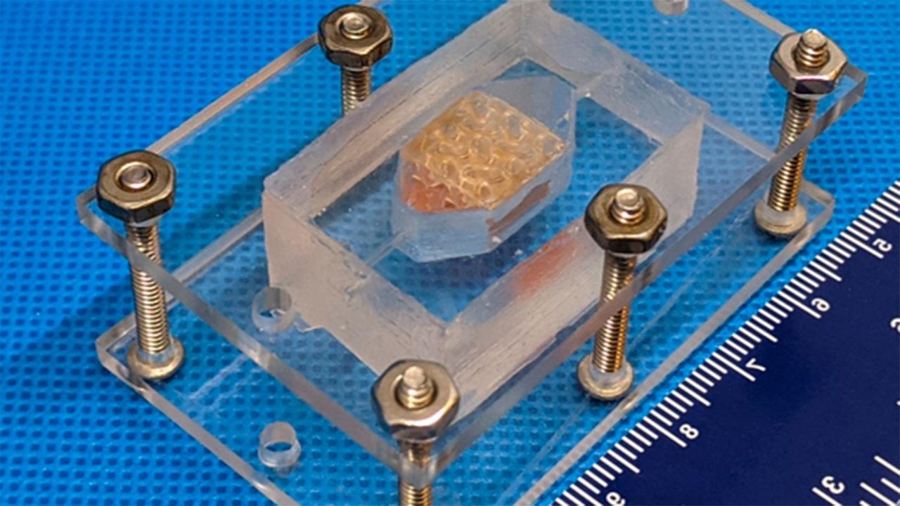 Ученые из США разработали искусственную печень с помощью 3D-печати