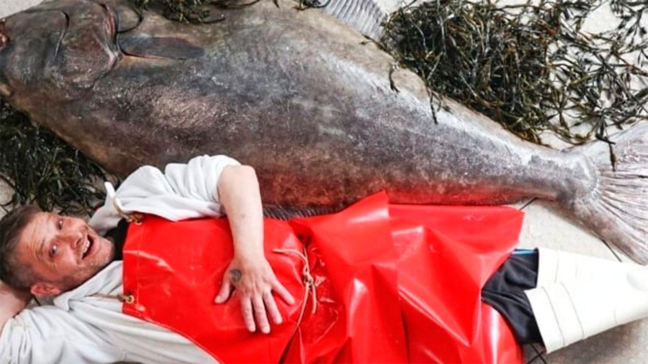 «Это монстр!»: в Шотландии выловили палтуса длиною 182 см