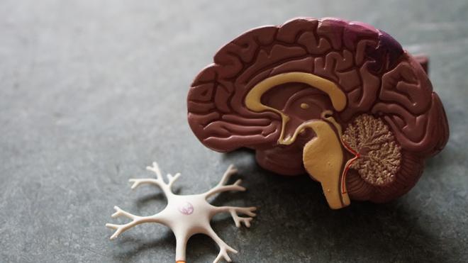 Найдена причина преждевременного старения и снижения остроты ума