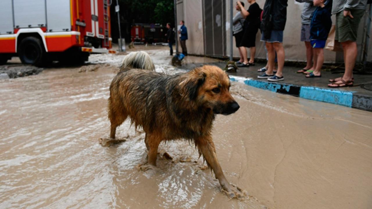 В Ялте заявили о стабилизации ситуации в регионе после наводнения