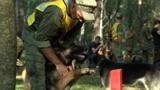 Четверолапые бойцы: как прошли соревнования военных кинологов «Верный друг» в Подмосковье