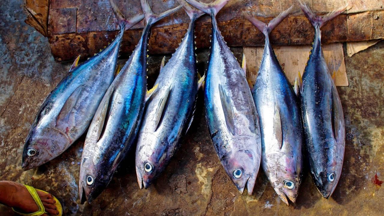 Ученые назвали популярную рыбу источником долголетия