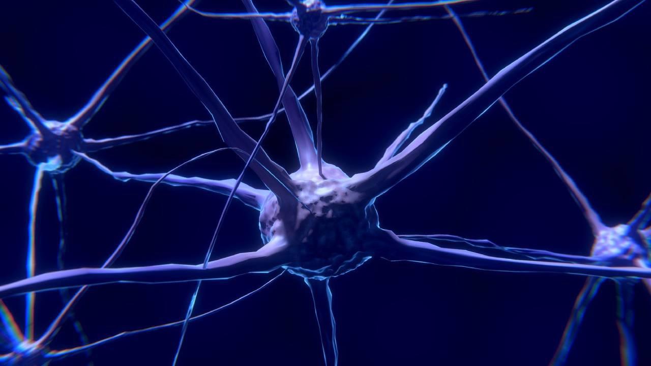 Ученые выяснили, как память «разрывает» нейроны мозга