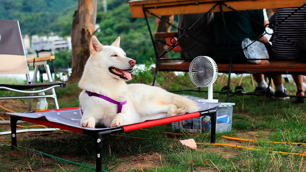 Кинолог объяснил, как помочь собаке пережить аномальную жару