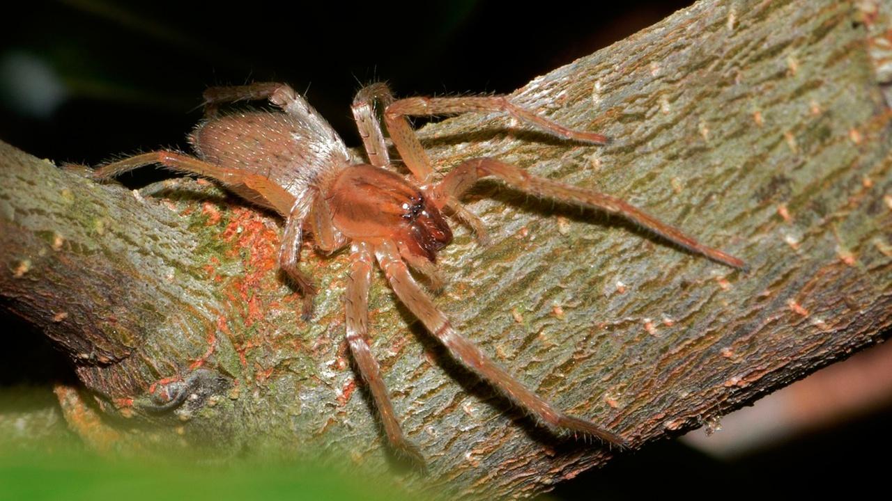 Ученые разработали лекарство от инфаркта из смертельного яда пауков