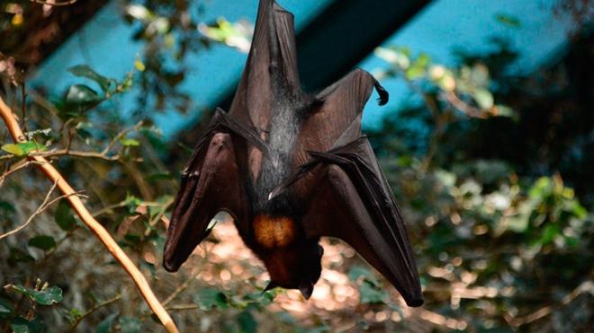 Ученые нашли окаменелость летучей мыши-вампира возрастом в сто тысяч лет