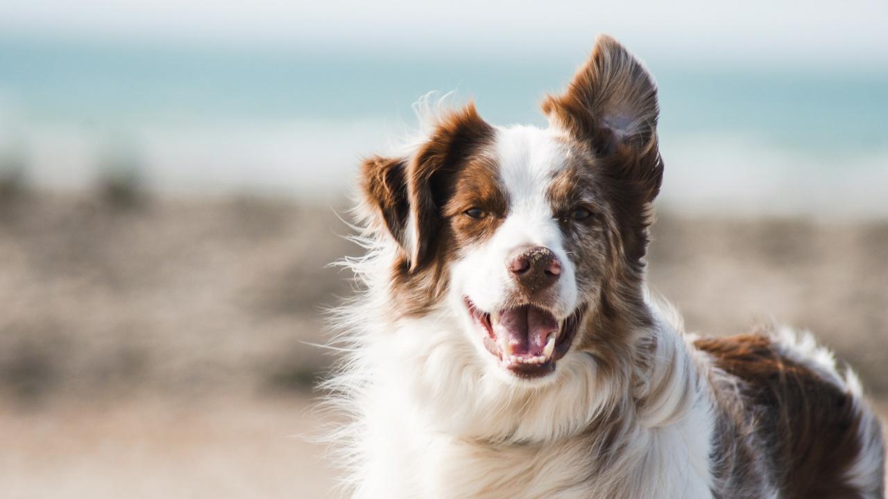 Собаки оказались способны определять ложь