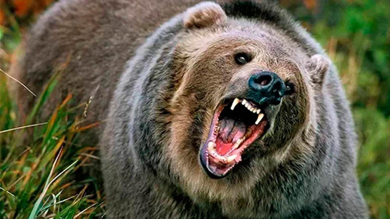 Медведь убил туриста в национальном парке в Красноярском крае