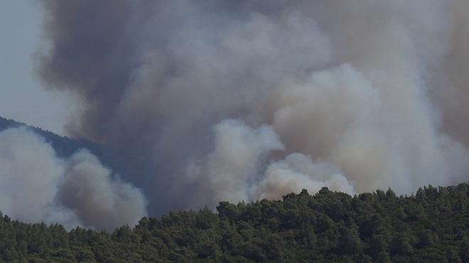 Эрдоган заявил о задержании подозреваемого в поджогах лесов в Турции