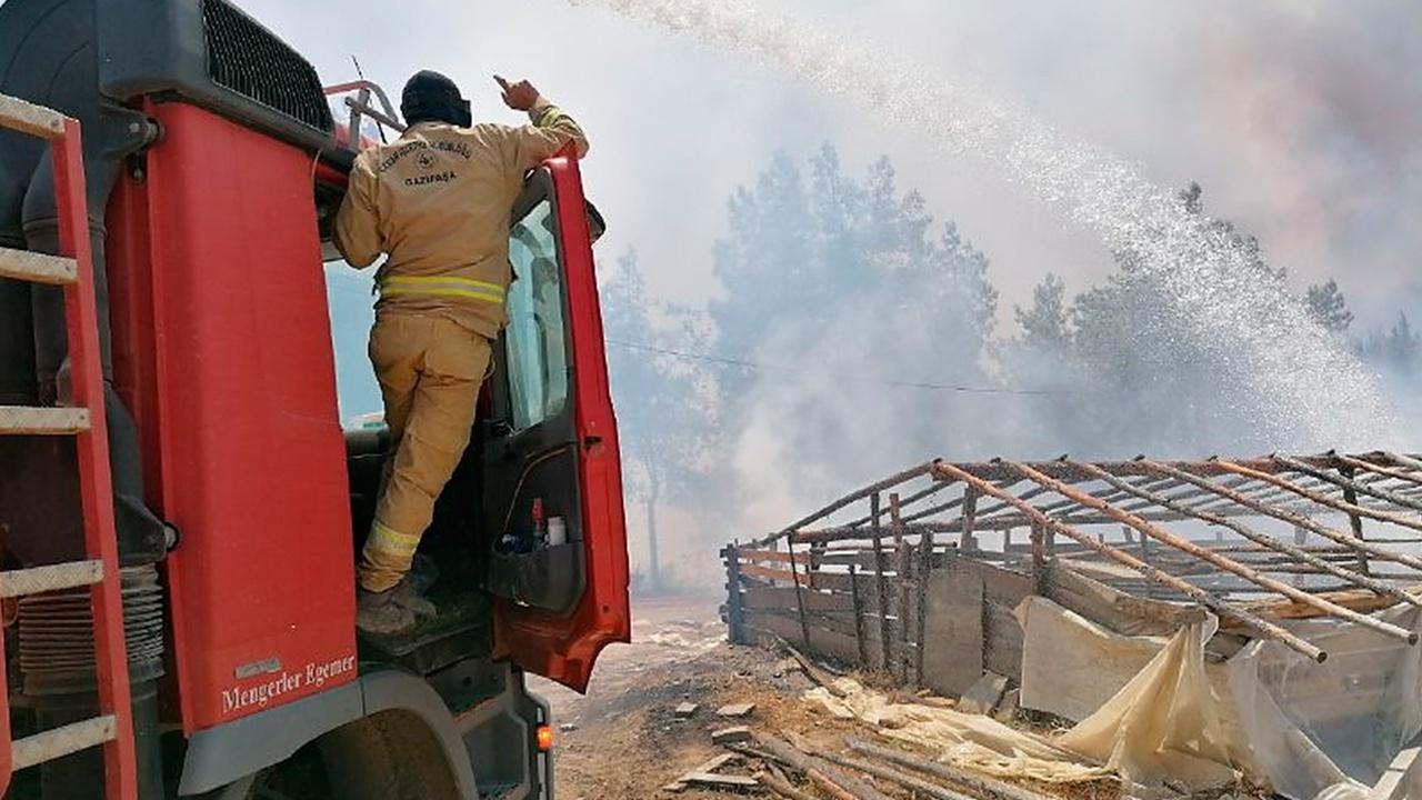 Пожар в районе турецкого Бодрума взяли под контроль