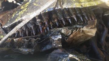 Истребитель времен ВОВ с останками пилота обнаружен в озере силами Северного флота