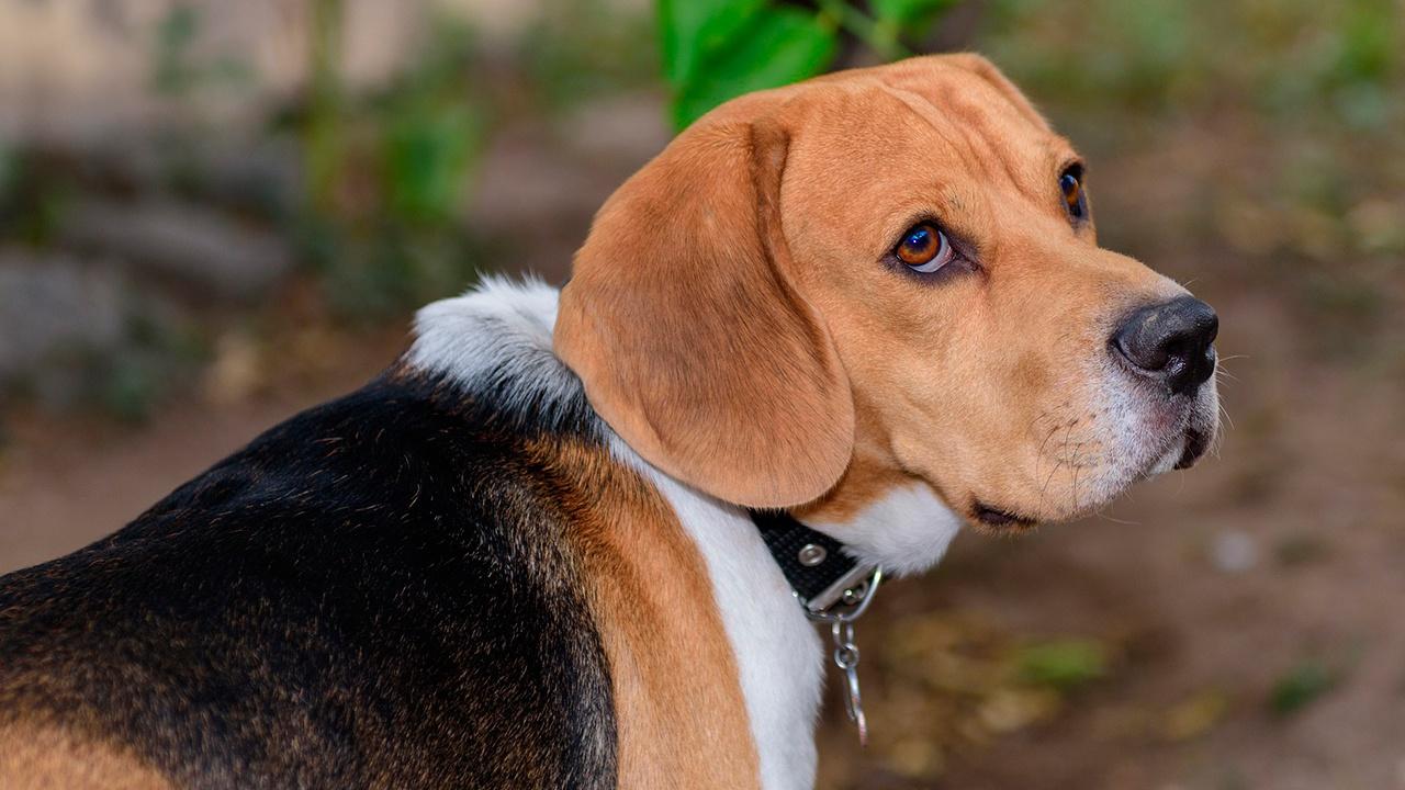 Названы лучшие породы собак для семей с детьми