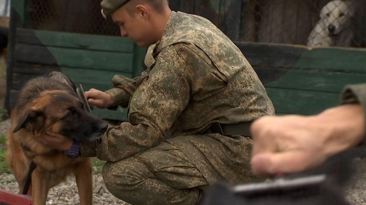 Под Хабаровском военнослужащие начали готовиться к конкурсу АрМИ «Верный друг»