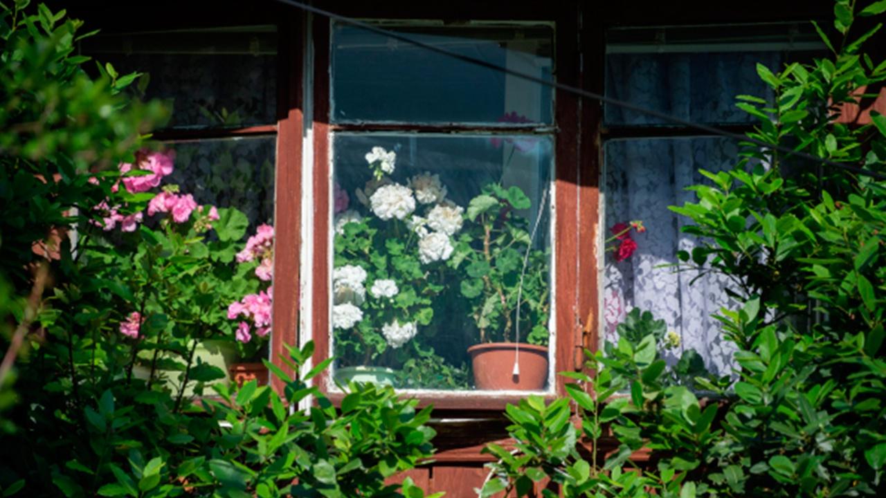 Названы опасные для детей комнатные растения