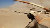 Вздымая песок: опубликованы кадры масштабных учений ОДКБ у границы Афганистана