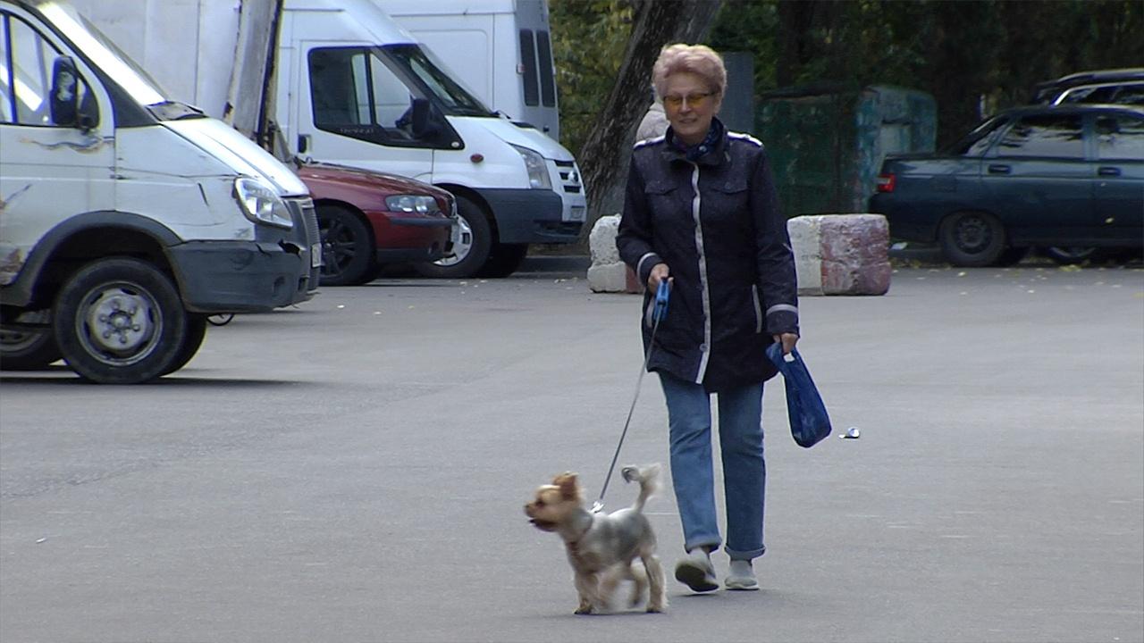 Пропала собака: как мошенники зарабатывают на беде хозяев домашних животных