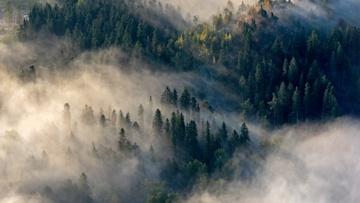 В России разрабатывают беспилотники для выслеживания диверсантов в лесах