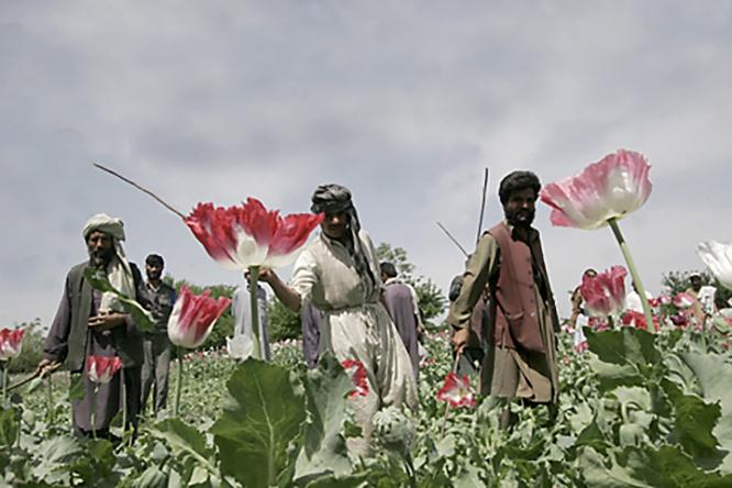С проникновением в ЦА боевиков и беженцев из Афганистана появятся новые цепочки наркотрафика, а из провинциальных преступных группировок, занятых наркотиками, вырастут современные наркокартели.